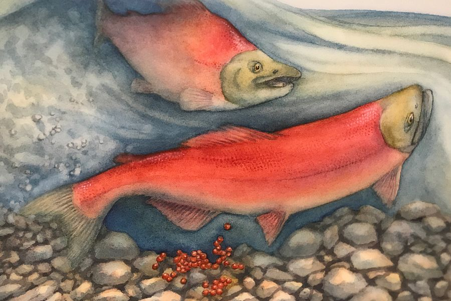 Youth for Salmon <em>Contest</em>